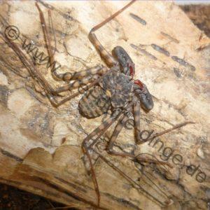 diverse Spinnen