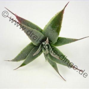Mini Pflanzen